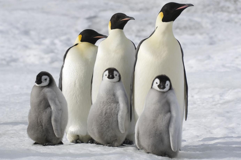 Reise Der Pinguine