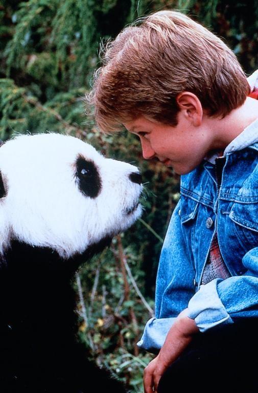 Little Panda Film